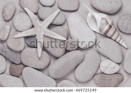 starfish and pebbles on the beach