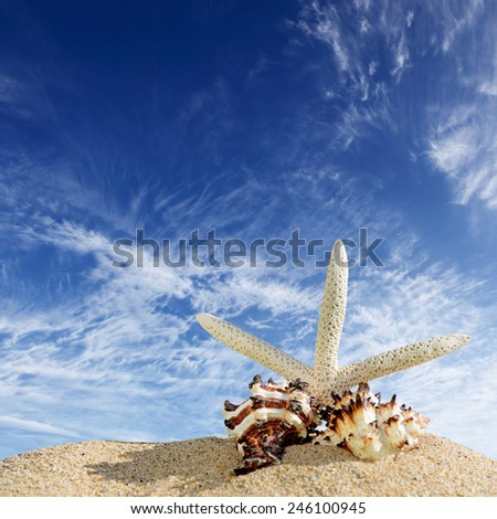 Starfish and sea shells on the sandy beach and blue sky - stock photo