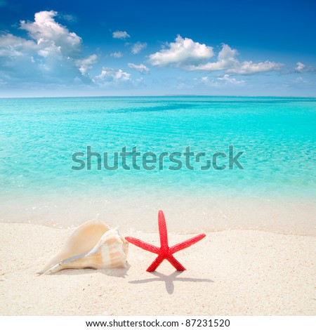 Starfish and seashell in white sand beach with turquoise tropical water - stock photo