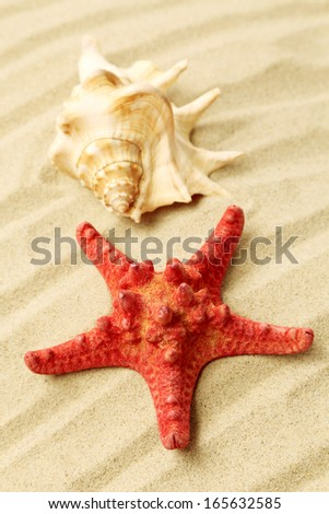 Starfish and seashell on sand. Located on sandy background. - stock photo