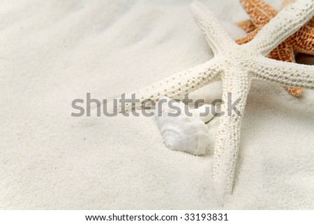 Starfish And Seashells In The Sand - stock photo