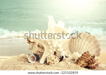 Starfish and seashells on sand beach - stock photo