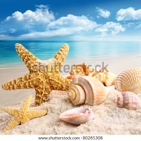 Starfish and seashells on the beach with blue sky - stock photo
