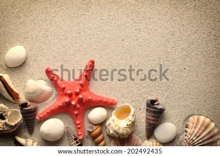 Starfish and shells on a sand beach  - stock photo