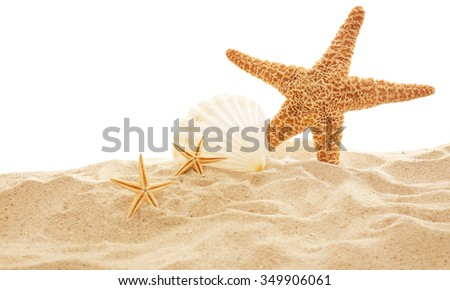 Starfish and shells on sand against white background