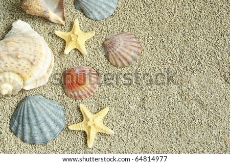 starfish and shells on the beach - stock photo
