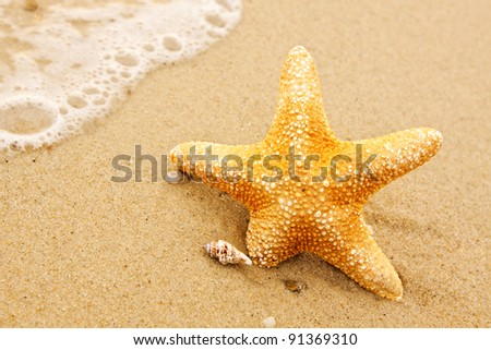 starfish and shells on the beach, - stock photo