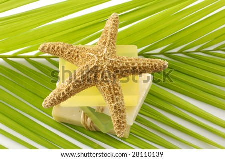 Starfish and soap on palm - stock photo