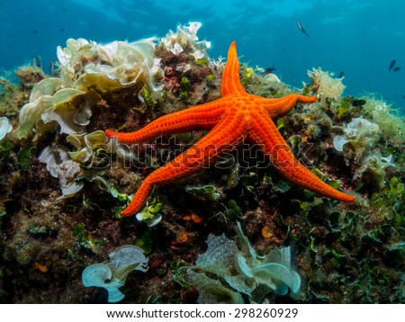 Starfish and sponge of the Mediterranean Sea.  - stock photo