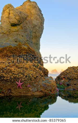 Starfish at low tide on a sea stack in Oregon with more stacks in the background - stock photo