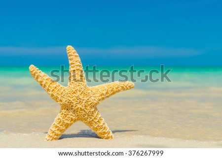 Starfish at the tropical beach - stock photo