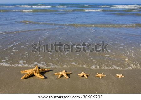 Starfish Family - stock photo