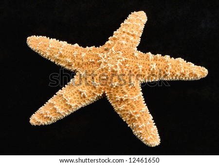 Starfish from oceans water on black background - stock photo