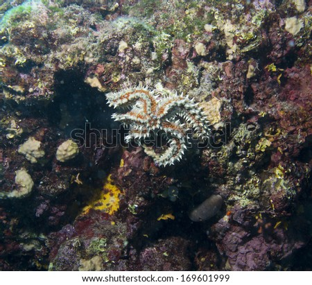 starfish in adriatic sea croatia - stock photo