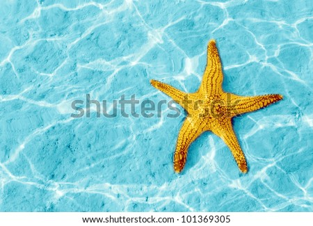 Starfish in blue water with light reflection. - stock photo