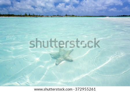 Starfish in clear water - stock photo