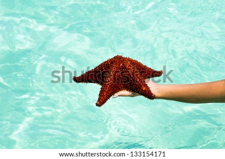 Starfish in hand in sea