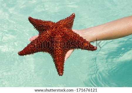 Starfish in hand in sea - stock photo