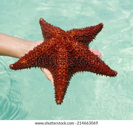 Starfish in hand in sea - stock photo