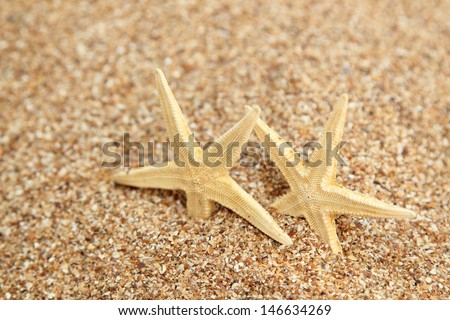 Starfish in the beach sand - copy space/Exotic Wallpaper Detail of a Vacation - stock photo