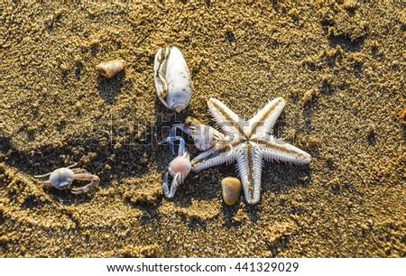 starfish in the beach sand - copy space, GOA - stock photo
