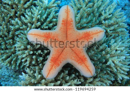 Starfish in the coral reef - stock photo