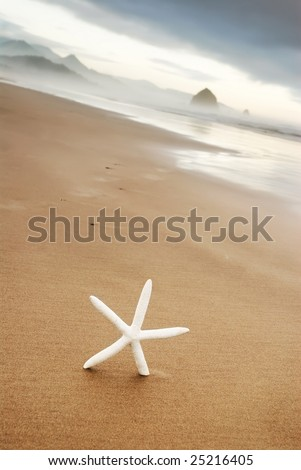 Starfish in the Sand at Cannon Beach, Oregon - stock photo