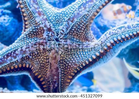 Starfish is sticking on glass in fishtank. - stock photo