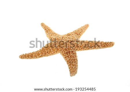Starfish isolated on white - stock photo