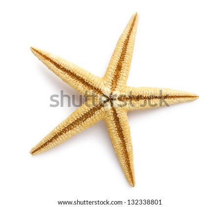 Starfish isolated on white background. Sea stars and shells. - stock photo