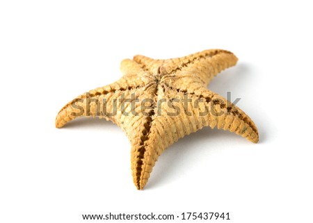 Starfish isolated on white background. Sea stars and shells - stock photo
