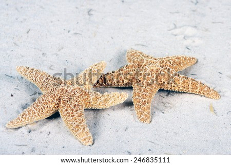 Starfish laying on the beach - stock photo