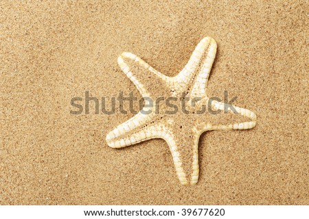 Starfish lie on sand seacoast