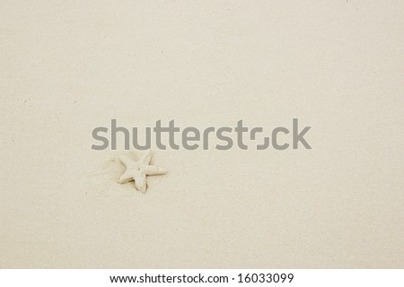 Starfish lying in the sand. - stock photo