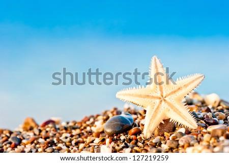 Starfish lying on the sand beach. - stock photo