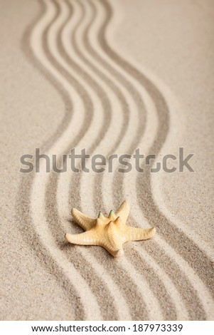 Starfish lying on the sand, can be used as background