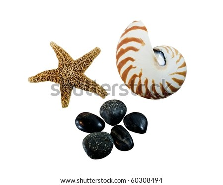 starfish, nautalis seashell and smooth stones on a white background
