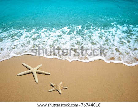starfish on a beach sand - stock photo