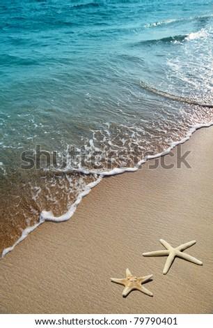 starfish on a beach sand - stock photo