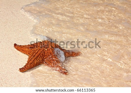 Starfish on a beach sand in ocean waves, closed up - stock photo