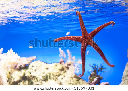 Starfish on a blue background under the sea