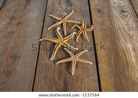 Starfish on a pier