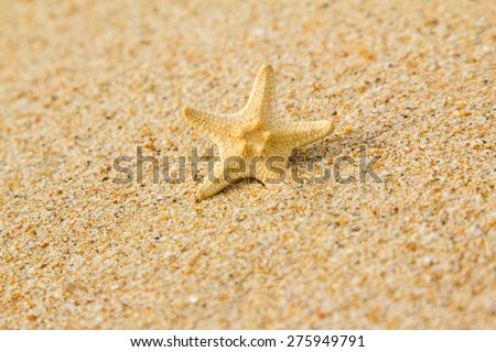 Starfish on a sand - stock photo