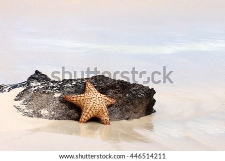 Starfish on a sand beach.