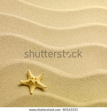 Starfish on a sand beach - stock photo