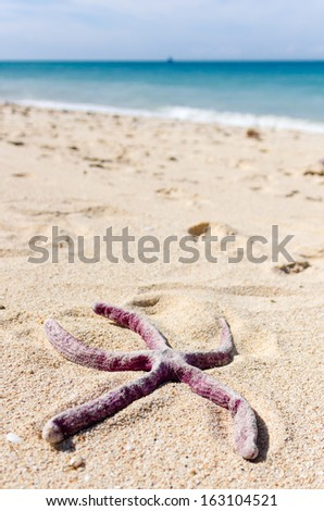Starfish on a tropical beach after being washed ashore by Super Typhoon Yolanda