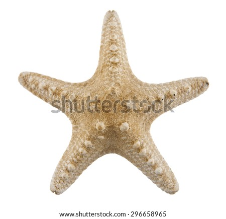 starfish on a white background - stock photo