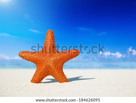Starfish On a White Sand Beach - stock photo