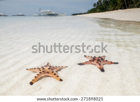 Starfish on Alona Beach at Panglao island. Philippines - stock photo