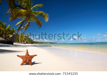 Starfish on caribbean beach with palm - stock photo